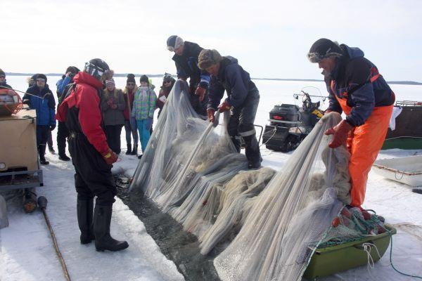 Talvinuottaus ei ole useimmille ihmisille tuttua, joten Puruvedellä halutaan jakaa tietoa kalastuksesta ja talvinuottauksesta muillekin. Kuvassa Ketolaisen nuottaporukka esittelee nuotta-apajaa koululaisporukalle Kesälahdella. Kuva: Tero Mustonen